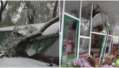 O gheretă de flori din centrul Capitalei, complet distrusă de un copac uriaș căzut peste ea!