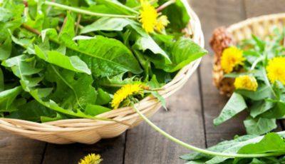 Frunzele de păpădie îmbunătățesc digestia, previn obezitatea, cancerul și ficatul gras!