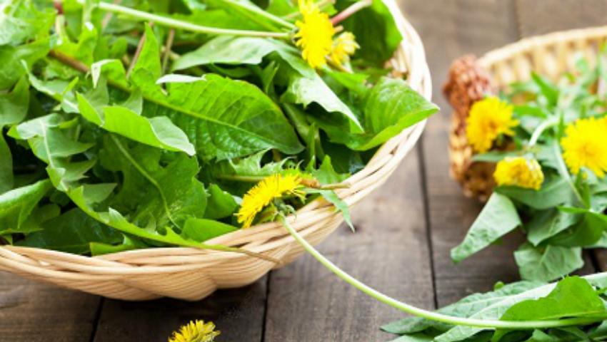 Foto: Frunzele de păpădie îmbunătățesc digestia, previn obezitatea, cancerul și ficatul gras!