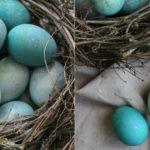 Foto: Vopsele ecologice magice pentru ouăle de Paști