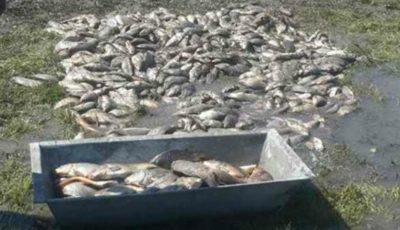 Grămezi de pește într-un sat din R. Moldova, după ce iazul a secat