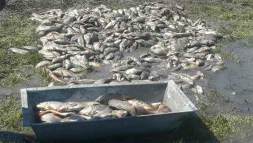 Foto: Grămezi de pește într-un sat din R. Moldova, după ce iazul a secat