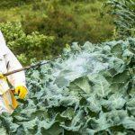 Foto: Cum elimini pesticidele din alimente