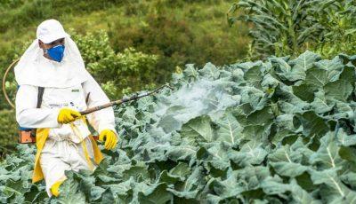 Cum elimini pesticidele din alimente