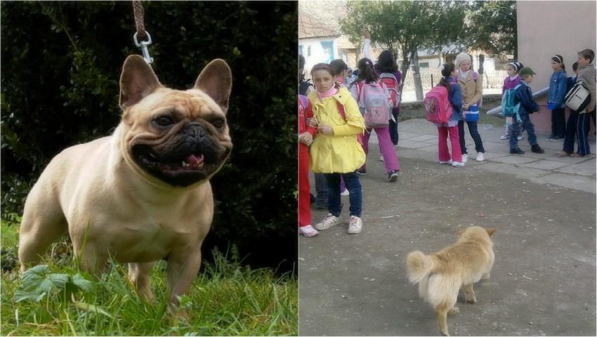 Foto: Mai mulți elevi, mușcați de câine în curtea unei școli din Capitală!