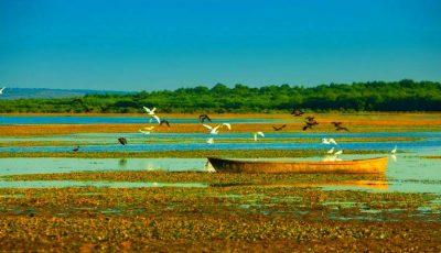 Priveliști spectaculoase! În sudul Moldovei au înflorit nuferii