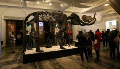 Ce vei putea vedea la Noaptea Europeană a Muzeelor!