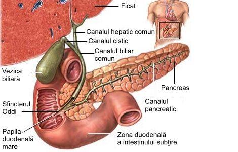 pancrias