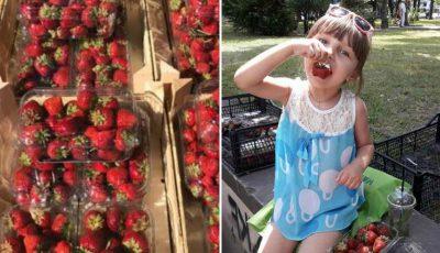 """FOTO Aproximativ două tone de fructe au ajuns la """"Summer Berry Fair"""". Scuarul Catedralei s-a transformat într-un adevărat târg agro-gastronomic"""