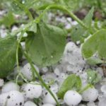 Foto: O ploaie cu grindină a făcut dezastru în sudul țării