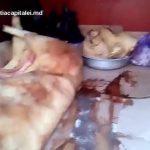 Foto: Carne de porc, păstrată în condiții insalubre, urma să fie comercializată la Piaţa Centrală