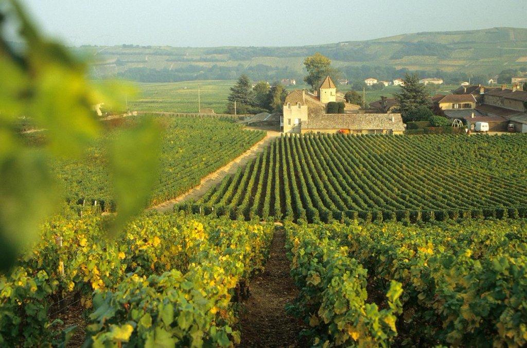 1403608433_bourgogne_burgundiya_bordo_vino_tur_ekskursiya_gid_franciya