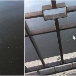 Foto: Alarmant! Zeci de pești morți în lacul din parcul Valea Morilor