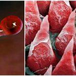 Foto: Uimitor! Cum arată organele corpului uman văzute la microscop