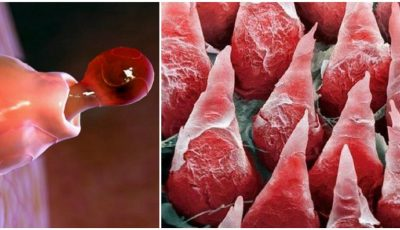 Uimitor! Cum arată organele corpului uman văzute la microscop