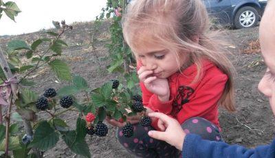Picnic la fermă! Savurează rețete delicioase de mure și culege fructe proaspete direct de la producător