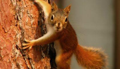 Din cauza unei veverițe, peste 45 de mii de oameni din San Diego au stat în beznă