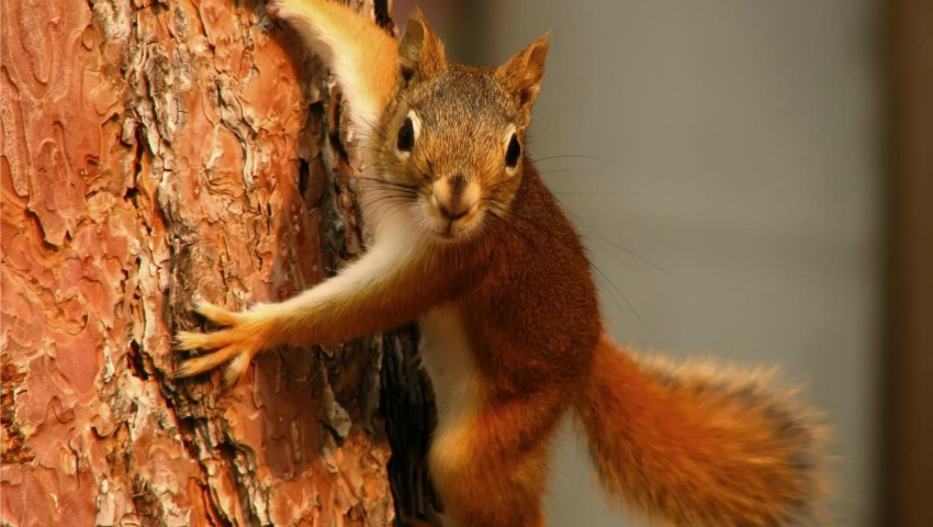 Foto: Din cauza unei veverițe, peste 45 de mii de oameni din San Diego au stat în beznă