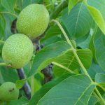 Foto: Fructul care previne cancerul și bolile de inimă