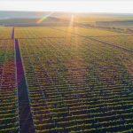 Foto: Viile Moldovei – faima țării în lume! Care sunt cele 4 regiuni vitivinicole IGP ale Moldovei și cum ajunge un vin bun să fie calificat cu această mențiune?
