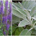Foto: Planta care tratează aproape orice boală! Este considerată cea mai sănătoasă din lume