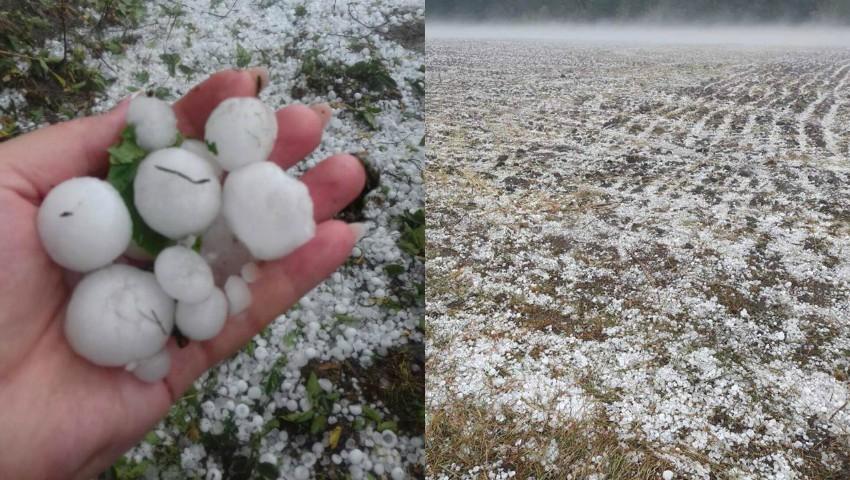 Foto: Grindina a făcut prăpăd în nordul țării. Lanuri întregi acoperite cu gheață