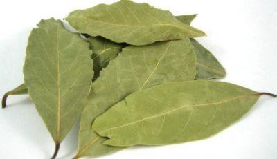 Lucrul mai puțin știut despre frunzele de dafin. Ce sunt, de fapt
