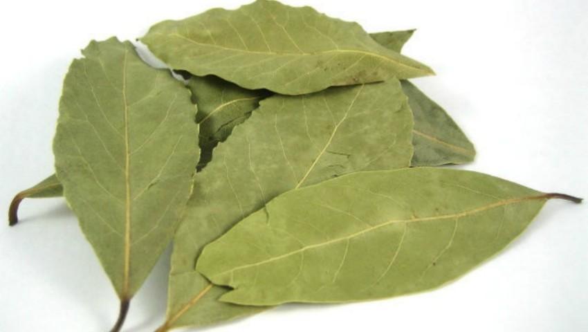 Foto: Lucrul mai puțin știut despre frunzele de dafin. Ce sunt, de fapt