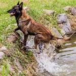 Foto: O tânără de 30 de ani a dispărut fără urmă în Țîpova. Un câine salvator o caută acum pe moldoveancă