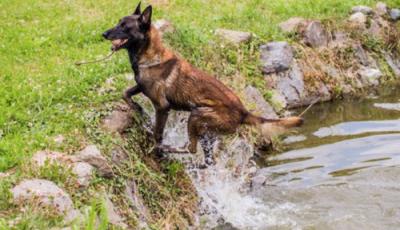 O tânără de 30 de ani a dispărut fără urmă în Țîpova. Un câine salvator o caută acum pe moldoveancă