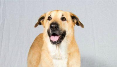 Un câine care a căzut într-o fântână adâncă din India a fost salvat