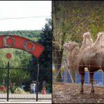 Foto: Animale noi la Grădina Zoologică din Chișinău