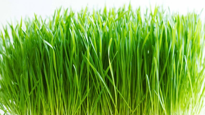 Terapia cu enzime vegetale. Ce boli tratează