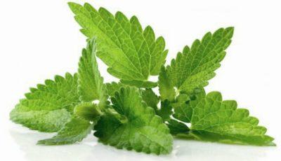 Planta care îţi taie pofta de mâncare poate fi inclusă în orice dietă