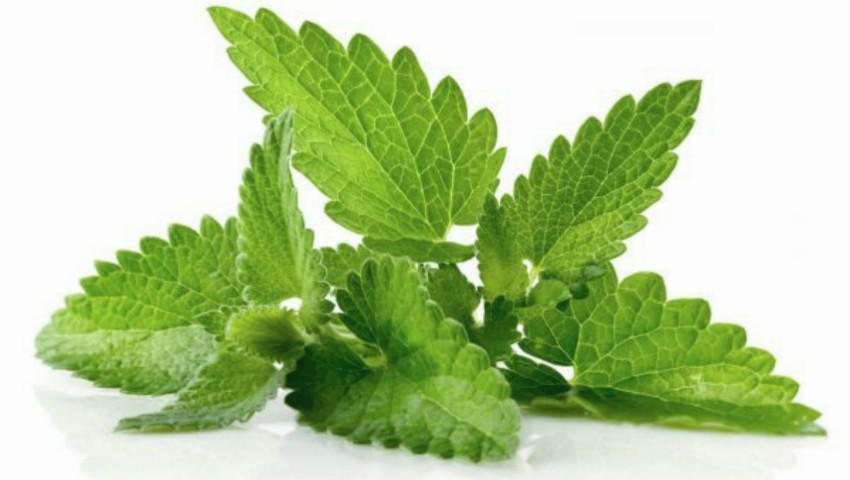 Foto: Planta care îţi taie pofta de mâncare poate fi inclusă în orice dietă