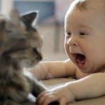 Foto: Este periculos să înghiți păr de pisică?