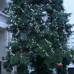 Foto: Pomul de Crăciun nu a ajuns încă la Chișinău