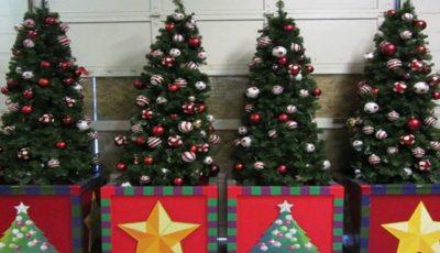 Noutate! Pomii de Crăciun pot fi luați în chirie