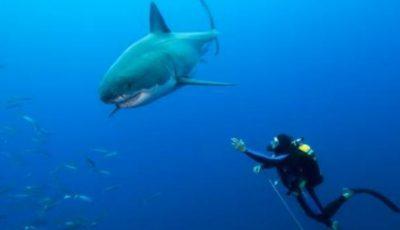 Întâlnire periculoasă între un scafandru și un rechin în apele Africii de Sud
