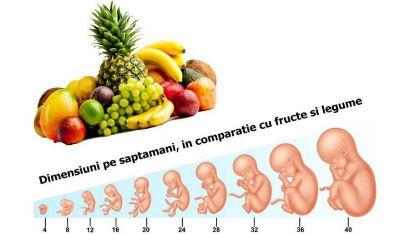 Foto: Cât de mare este bebelușul în fiecare săptămână de sarcină: dimensiuni în comparație cu fructe și legume
