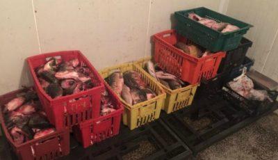 Video!!! Pește viu păstrat în condiții antisanitare