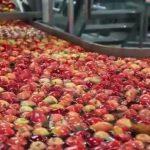 Foto: Adevărul despre merele din marile supermarketuri. Vezi video!