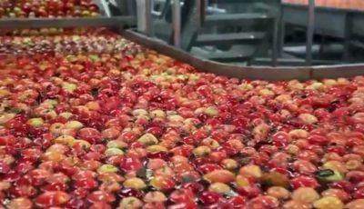 Adevărul despre merele din marile supermarketuri. Vezi video!