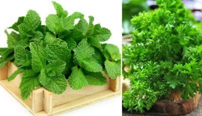 Acestea sunt plantele aromatice pe care le poți crește în casă
