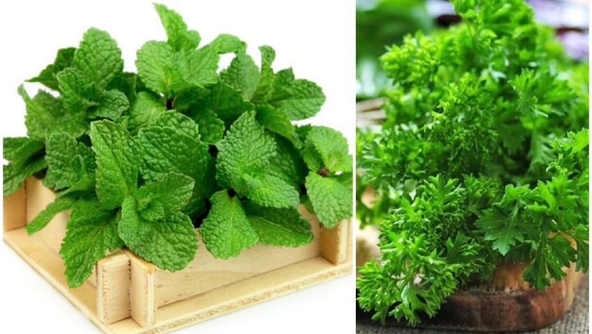 Foto: Acestea sunt plantele aromatice pe care le poți crește în casă