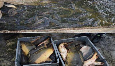 1.400 de kg de pește viu de contrabandă vândute în Piața Centrală, au fost confiscate și nimicite