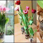 Foto: Iată cum poți avea lalele înflorite în casă tot anul!