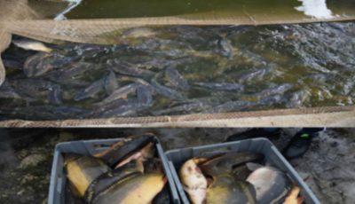 Trei tone de pește vor fi nimicite la Ialoveni. Produsul păstrat în condiții insalubre, se vindea în piețele din Capitală