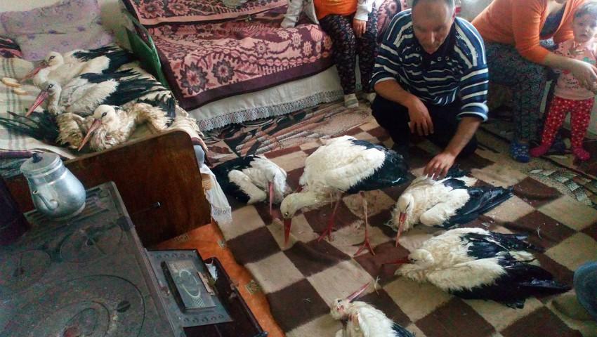 Foto: Video! O familie a adăpostit în casă mai multe berze