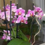 Foto: Cum poți să salvezi o orhidee ofilită?